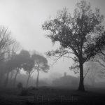 Pasture - November Fog 2