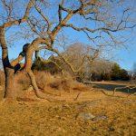 Lone Tree - March Light 2