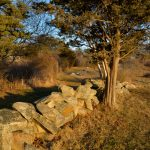 Stone Wall - March Light
