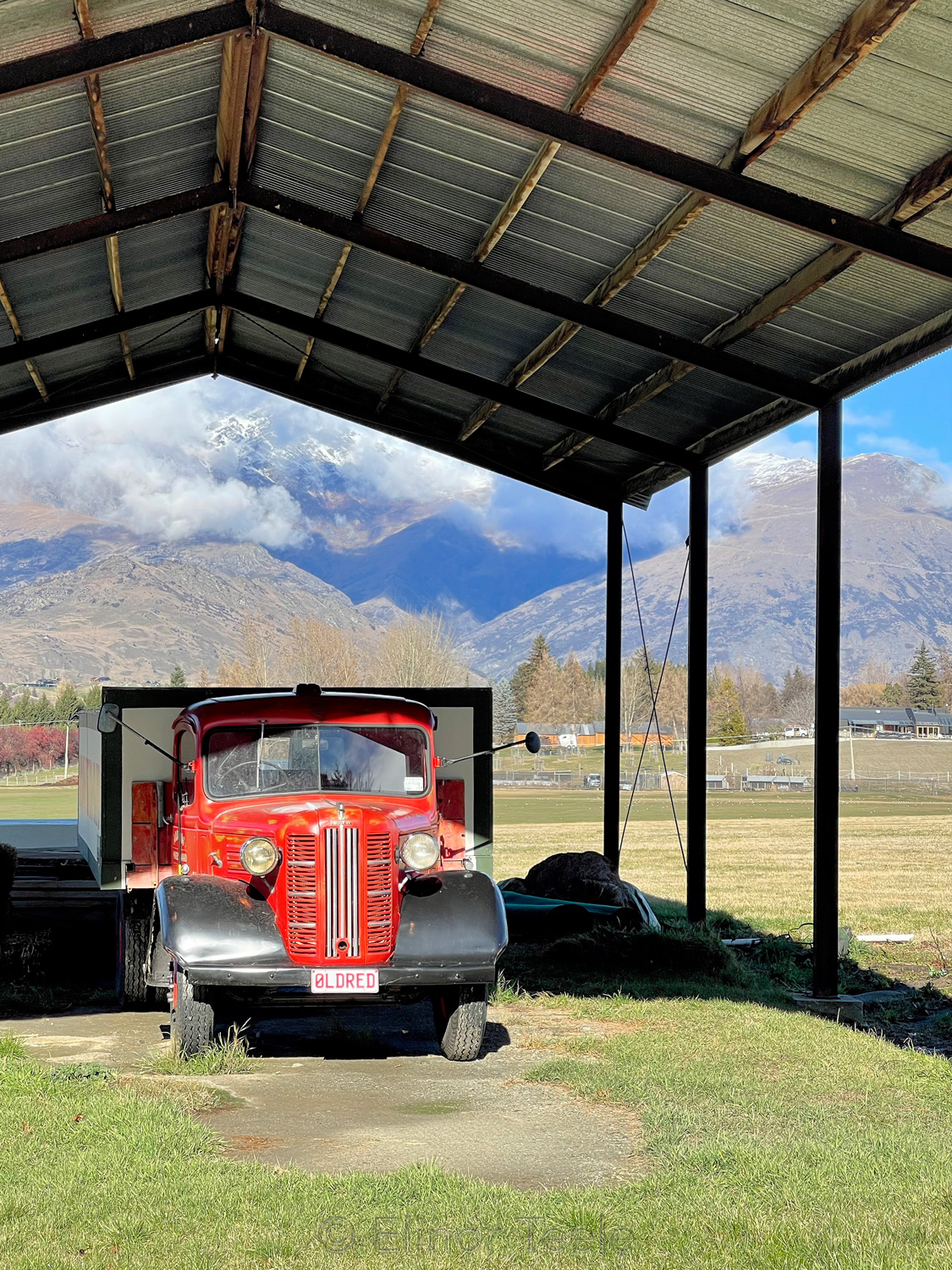 Old Red, Arrowtown