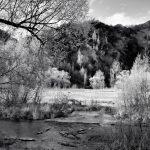 Arrow River - Spring Flowering 1