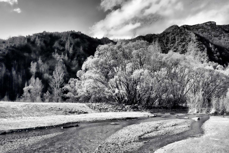 Arrow River - Spring Flowering 2