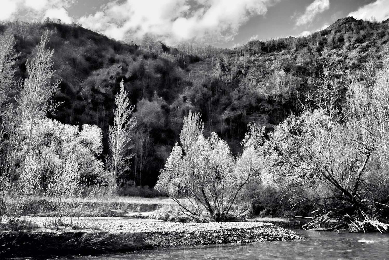 Arrow River - Spring Flowering 4