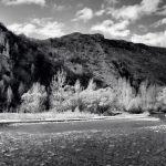 Arrow River - Spring Flowering 6