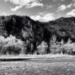 Arrow River - Spring Flowering 7