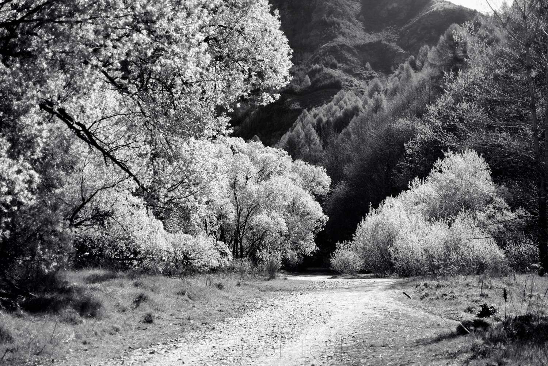 Arrow Riverbed Trees in October 1