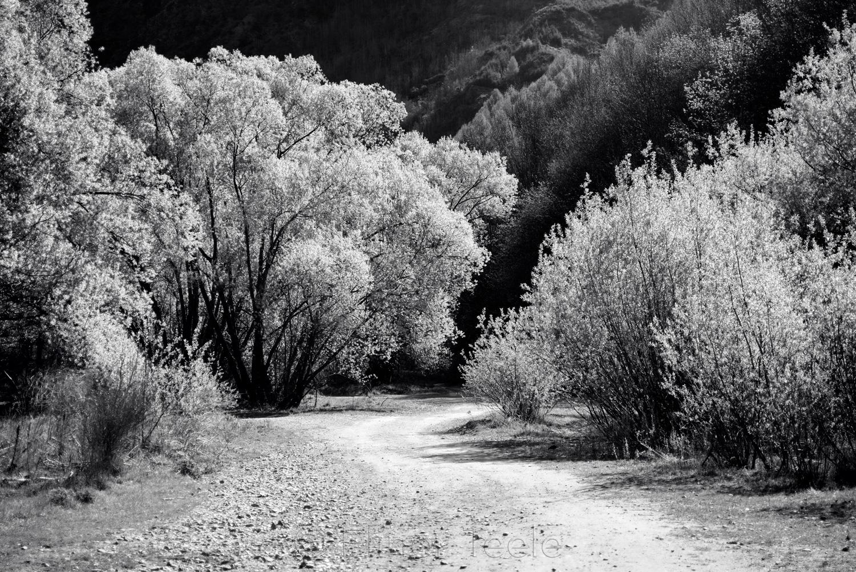 Arrow Riverbed Trees - Black & White 2