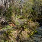 Bush Creek Trail in October 1