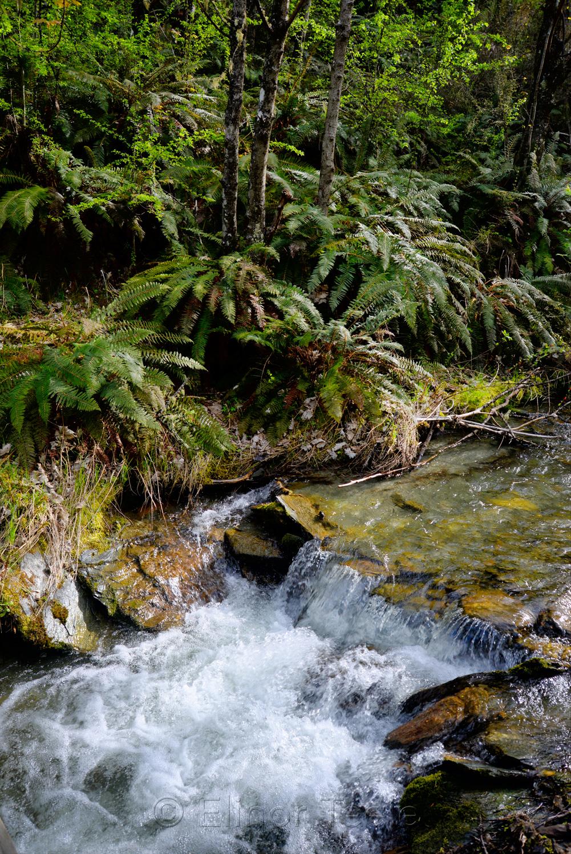 Bush Creek Trail in October 2