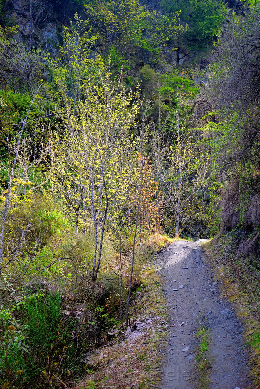Bush Creek Trail in October 3