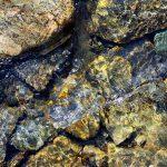 Rocks Underwater in Spring 4