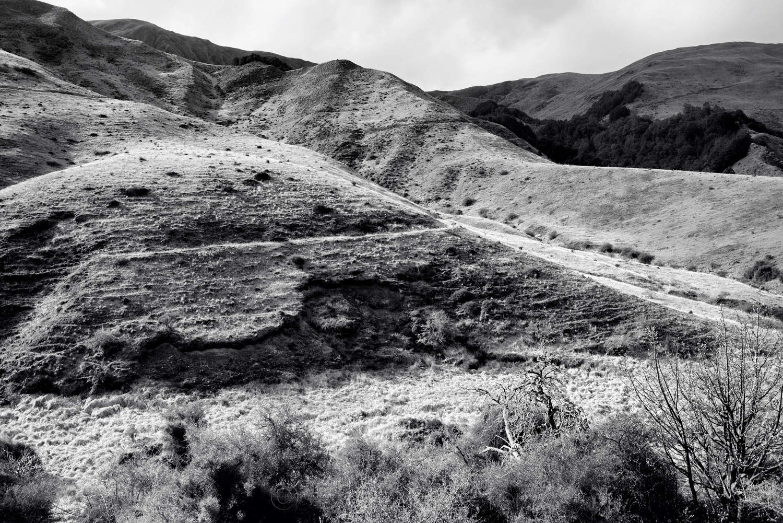 Sawpit Gully - Big Hill Track - Black & White