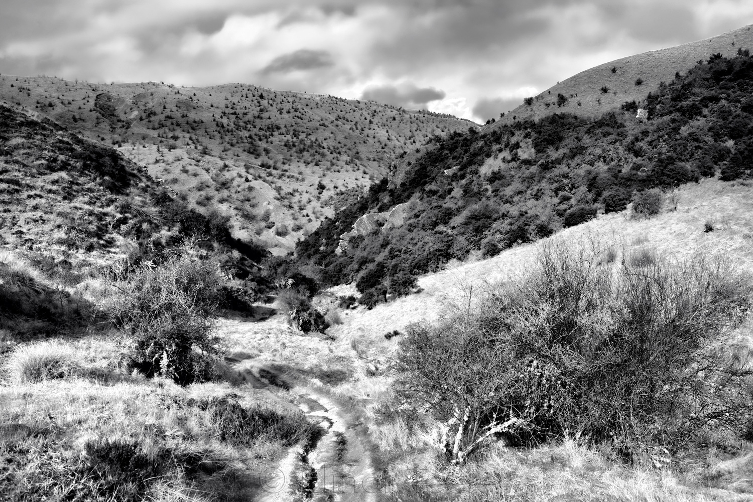 Sawpit Gully - Heading for the Arrow - Black & White